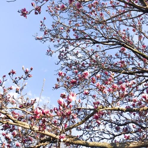 Photo Mar 19, 18 02 43